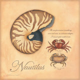 Nautilus Prints by Stephanie Marrott
