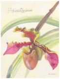 Celery Orchid Posters by Elissa Della-piana