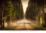 Cypress Lined Road II, Siena Tuscany Prints by Jimmy Williams
