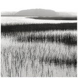 Nut Island, Salt Marsh Prints by Dorothy Kerper Monnelly