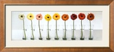Gerbera Spectrum Art