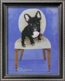 French Bull Dog Art by Carol Dillon