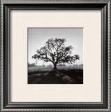Oak Tree, Sunrise Prints by Ansel Adams
