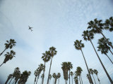 Airplane Soaring over Palm Trees Photographic Print