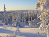 Peaceful Forest Covered in Snow the The Cold Winter in Finland Photographic Print