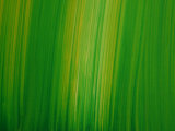 Striated Green Background Photographic Print