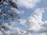 Wispy Clouds in Brilliant Sky with Tree Photographic Print