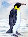 Portrait of Penguin Prints