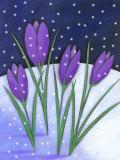 Crocus Flowers Blooming in Snowfall Prints