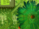 Conceptual Shot of Flower Growing on Computer Circuit Board Photographic Print