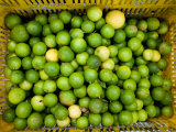 Basket of Fresh and Juicy Key Limes Photographic Print