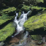 Water Rushing Down Cascading Moss Covered Waterfall Photographic Print