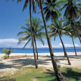 Tall Tropical Palm Trees on Sandy Beach Photographic Print