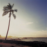 Silhouette of a Single Palm Tree on a Beach Photographic Print