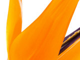 Close-Up of Bright Orange Flower Petals in Bloom Photographic Print