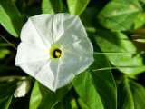 Close-Up of Blooming Tropical White Flower Photographic Print