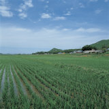 Landscape of Beautiful and Lush Cultivated Farmland Photographic Print
