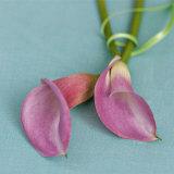 Arum Lilies Prints by Catherine Beyler