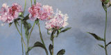 Peonies Posters by Claire Basler