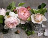 Drei Rosen Kunst von Catherine Beyler
