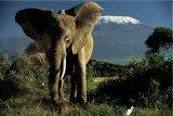 Kenyan Elephant Prints by Jean-Michel Labat