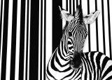 Zebra I Art par Tim Flach