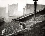 Cats on a Roof, Paris I Posters par Edouard Boubat