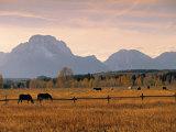 Jackson, Teton Range, Wyoming, USA Fotografisk trykk av Walter Bibikow
