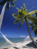 Hammock on Beach, Danarau, Viti Levu, Fiji Photographic Print by Neil Farrin