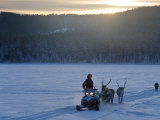 Winter Landscape, Reindeer and Snowmobile, Jokkmokk, Sweden Photographic Print by Peter Adams