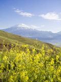Mount Ararat, Dogubayazit, Eastern Turkey, Turkey Photographic Print by Jane Sweeney