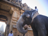 Thanjavur Temples, Tamil Nadu, India Photographic Print by Michele Falzone