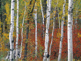 Autumn Foliage, South Dakota, USA Photographic Print by Walter Bibikow