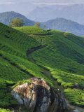 Tea Plantations, Munnar, Western Ghats, Kerala, India Photographic Print by Michele Falzone