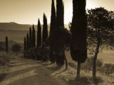 Country Road Towards Pienza, Val D' Orcia, Tuscany, Italy Photographie par Doug Pearson