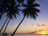 Pam Tree and Beach at Sunset, Tahiti, French Polynesia Photographic Print by Neil Farrin