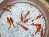 Goldfish in Pan, Old Town, Lijiang, Yunnan Province, China Lmina fotogrfica por Walter Bibikow