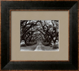 Path in the Oaks II, Louisiana Posters by Monte Nagler