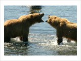 Kodiak Bear Alaska Conversation Giclee Print by Charles Glover