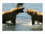 Kodiak Bear Alaska Conversation Giclee Print by Charles Glover