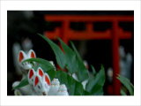 Shrine Foxes, Japan Giclee Print by Petra Wels