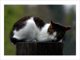 Cat Nap Giclee Print by Stephen Lebovits