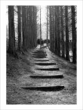 Forest Steps Giclee Print by Stephen Lebovits