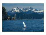 Alaska Passage Humpback Fin Giclee Print by Charles Glover