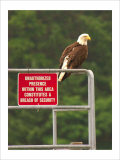 America Under Eagle Watch Giclee Print by Charles Glover