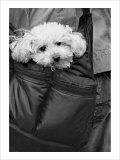 Doggy Bag Giclee Print by Stephen Lebovits