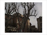 Sycamore, Aix-en-Provence, France Giclee Print by Nicolas Hugo