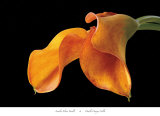 Double Orange Calla Poster par Amalia Veralli