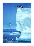 Penguins Diving Off an Iceberg Kunst van Steve Bloom