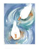 Ducks in a Pond Posters by Paula Patterson